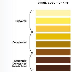 urine-hydration-300x300.jpg