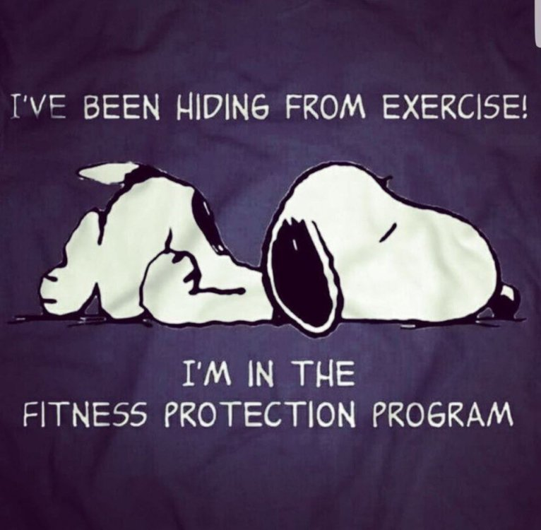 Image may contain: text that says 'I'VE BEEN HIDING FROM EXERCISE! I'M IN THE FITNESS PROTECTION PROGRAM'